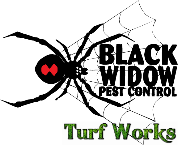 Black Widow Pest Control & Turf