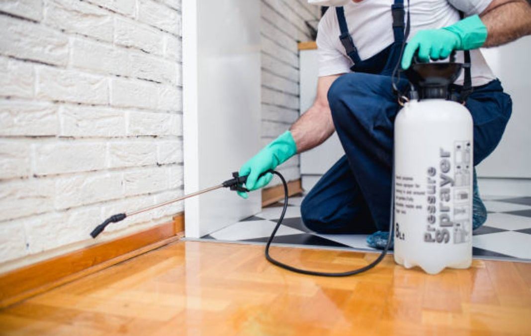 What a Pest Control Company in South Jordan, UT Can Do for Your Home