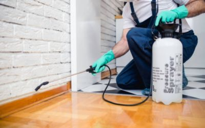 Pest Control Services in Salt Lake City, Utah